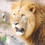 きたはまおにいさんは東武動物公園の人気飼育員!ギィギィ椅子とは?